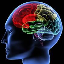 Brain-picture